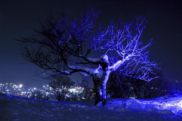 雪あかりの路/光る天狗桜