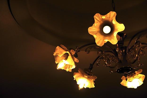 飾り電灯の部屋で