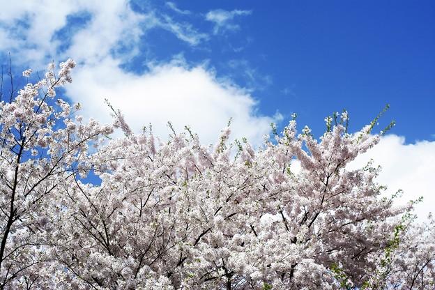 フレーミング 習作 8 /花より空より雲