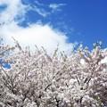 Photos: フレーミング 習作 8 /花より空より雲