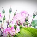写真: フレーミング/壁際のピンク