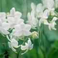 Photos: 春なのに・・・春なので・・・ green 3