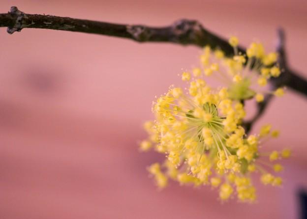 春なのに・・・春なので・・・ green 5