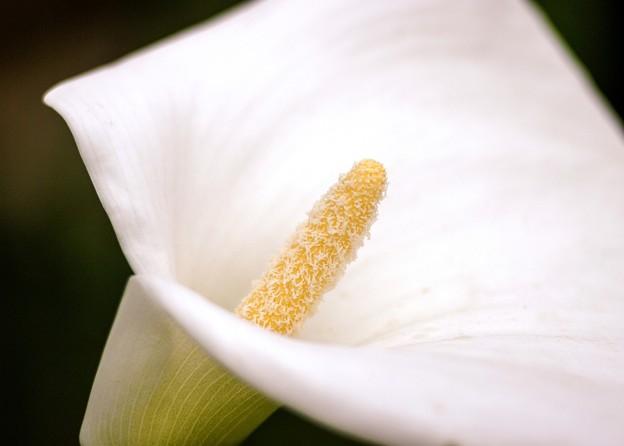 春なので whiteness 6