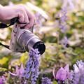 写真: 北国の春を撮る