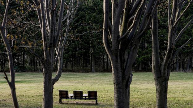 パンフォーカス/残春の公園