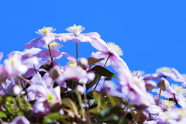 写真: 「全部、青い。」