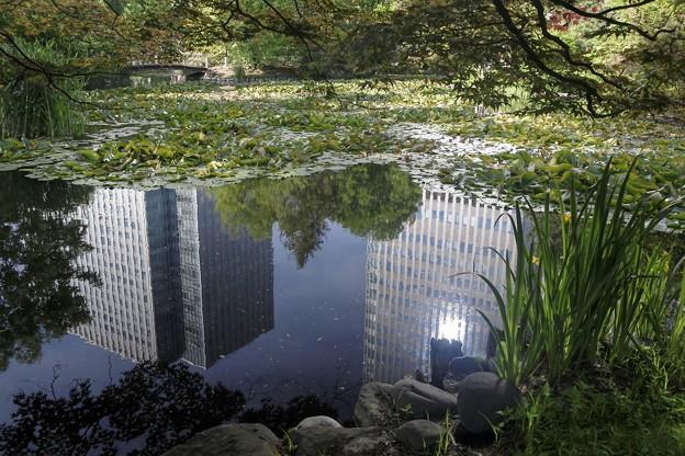 写真: 6月の午後/都会にある池