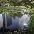 6月の午後/都会にある池