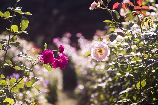 9月の庭/CCD sample shoot 6