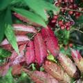 写真: 秋の証拠