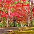 Photos: 樹芸の森で/番外