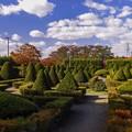 写真: 秋のコントラスト