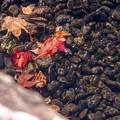 写真: 水底の秋
