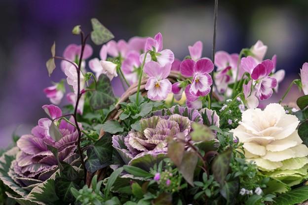 2月のガーデンショップ/花籠