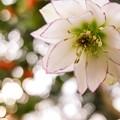 Photos: 季節の花 pattern 1