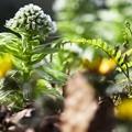 Photos: 生態的擬似自然/川辺の遅い春