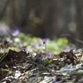 Photos: 里山の遅い春 *