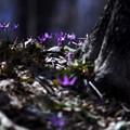 里山の遅い春 **
