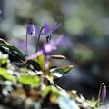 Photos: 里山の遅い春 again *
