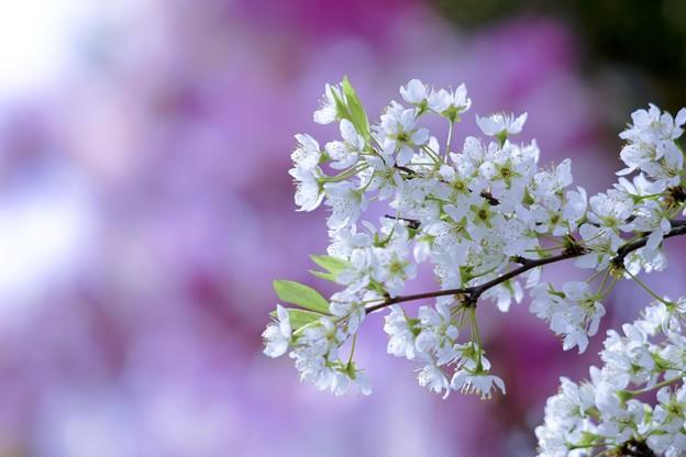 "Photos: 春・花・美   ""和テイスト"""