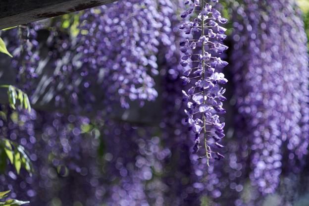 Photos: 「夢遊の花々」