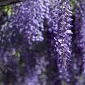 「夢遊の花々」