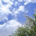 Photos: 好きです、リラの花咲く街 a