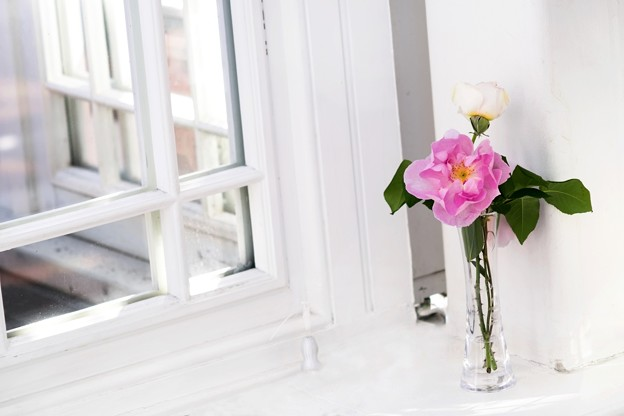 Rose of the window