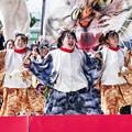 Photos: YOSAKOIソーラン祭り2019/ねこダンス