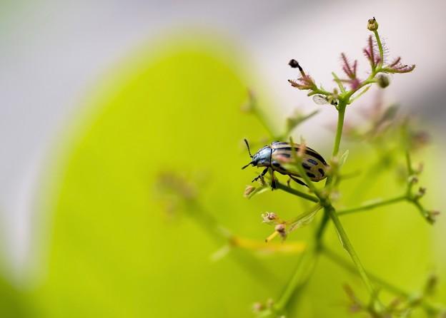 花フェスタ/ bug