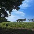 Photos: 花菖蒲の丘を歩く