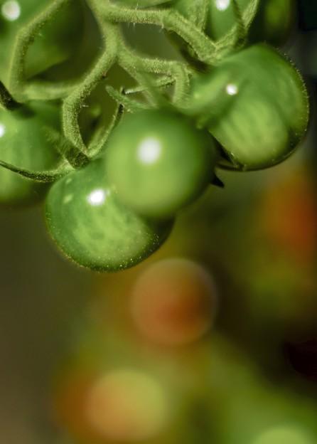 Photos: 過日の果実/Fresh green