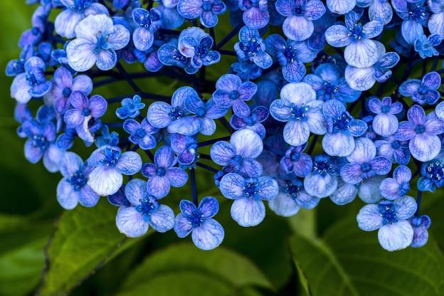 雨上がりのクラシカル-ブルー