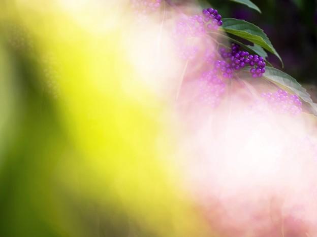 10月の庭/小春日和の紫