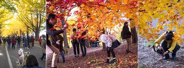 秋を撮る、撮る、撮る