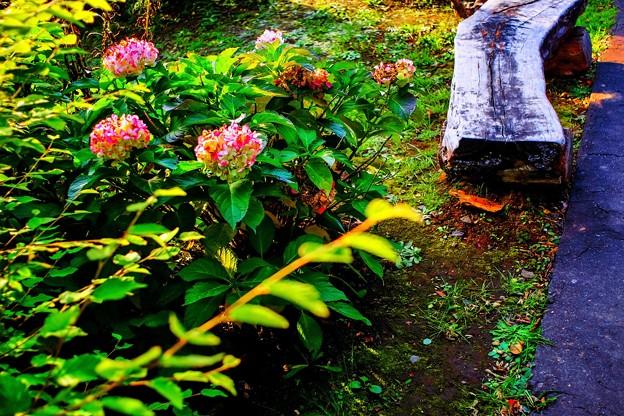 「秋が座るベンチ」