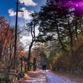 晩秋の道行き