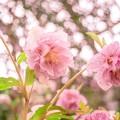 柔らかな春