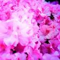 Photos: Pink Contrast