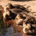 Photos: sunbathe