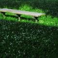 Photos: 暖かいベンチ