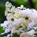 ♪ サビタの花よ 白い花 ~
