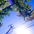 Photos: Sky-blue collection ******