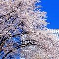 Photos: Sky-blue collection *********