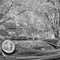 Monochromatic-cherry blossoms with a car