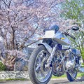 motorbike & cherryblossoms HDR