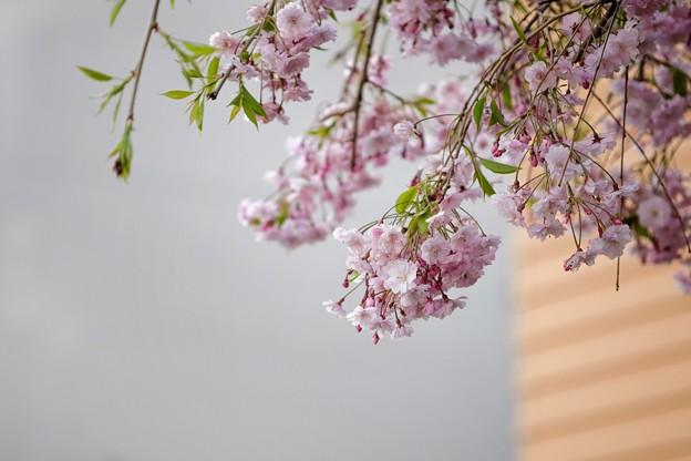 あの春の記憶…