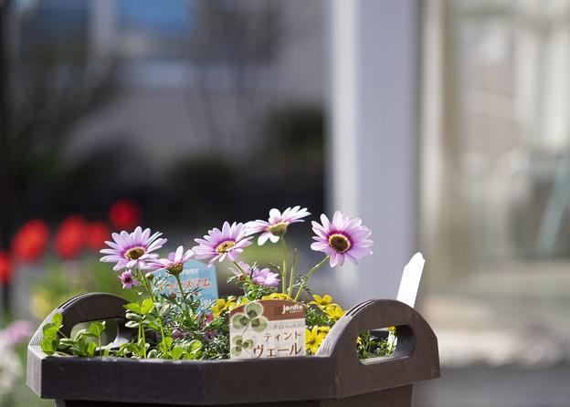 新しい春を植える