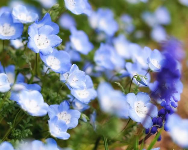 Photos: Blue & Blue